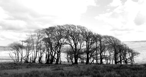 3. trees