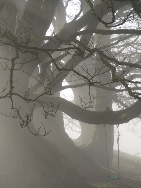 Foggy Exmoor Trees