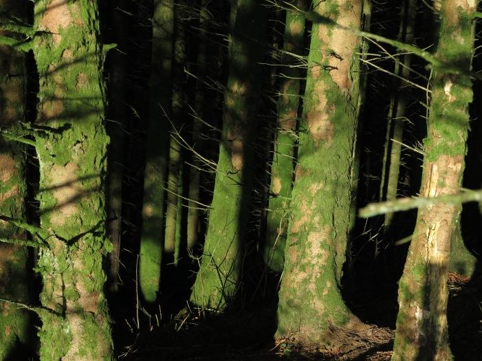 Green Moss on Beech