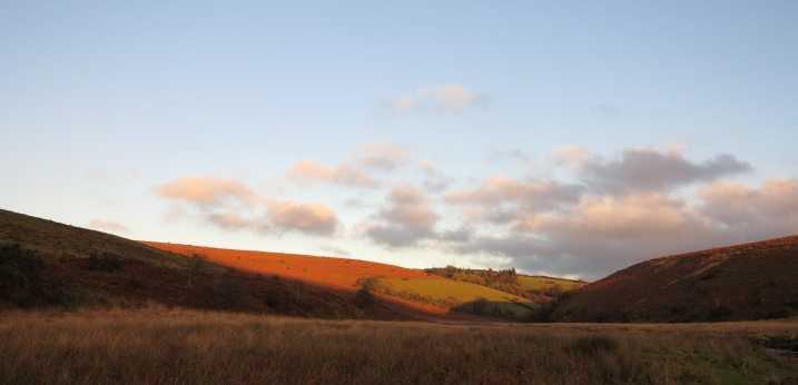 Evening sun on bracken